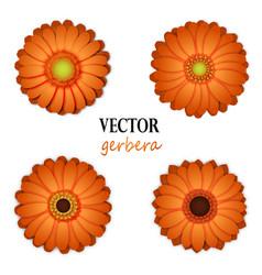 Orange gerbera collection vector
