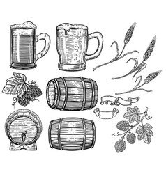 set of hand drawn beer design elements hop wheat vector image