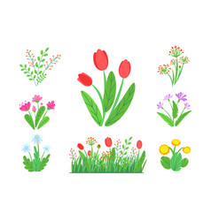 spring garden flowers with blooming grass vector image