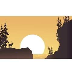 At afternoon antelope silhouette beatiful vector image vector image