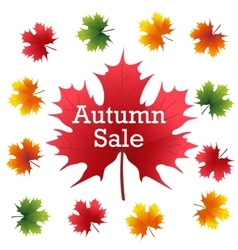 Autumn Sale on maple leaf vector image