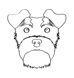 isolated schnauzer avatar vector image vector image