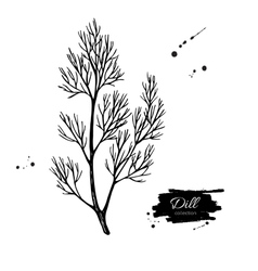 Dill hand drawn Isolated vector image vector image