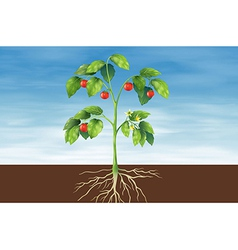 Parts of a plant vector image