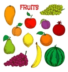 Ripe and fresh fruits colorful sketch symbol vector image vector image