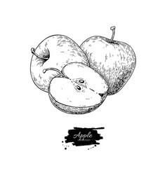 apple drawing hand drawn fruit and sliced vector image