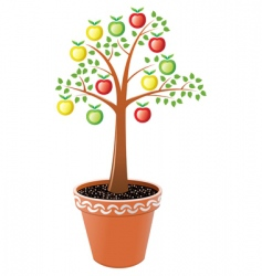apple tree in pot vector image