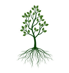 green tree with leaves and roots outline vector image