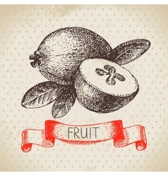 Hand drawn sketch fruit feijoa Eco food vector image