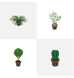 Isometric houseplant set of tree peyote plant vector
