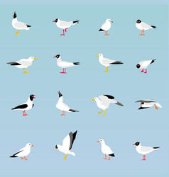 set of beautiful seagulls vector image