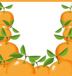 White background with border of oranges fruits vector