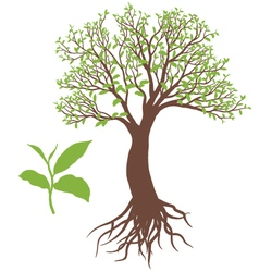 The tree with root vector image