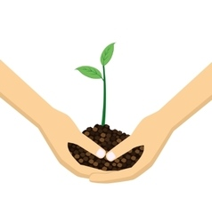 Two Hands holding young plant vector image vector image