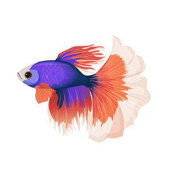 betta small colorful freshwater ray-finned fish vector image vector image