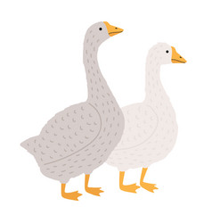 adorable goose and duck isolated on white vector image