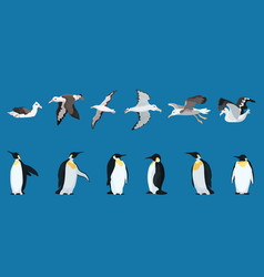Albatrosses and penguins large selection bright vector