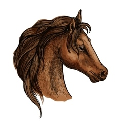 Brwon horse head profile portrait vector