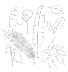 continuous line drawings of tropical leaves vector image