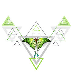 geometric pattern with green butterfly vector image