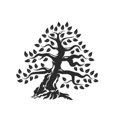 organic natural and healthy olive tree silhouette vector image