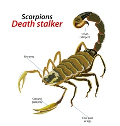 Scorpion death stalker vector