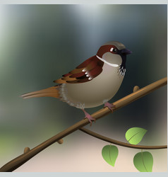 sparrow little bird on a tree branch in forest or vector image