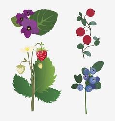 wild berries and flowers vector image vector image