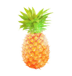 watercolor pineapple fruit on white vector image vector image