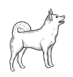dog in sketch style vector image