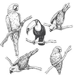 Doodle tropic birds vector