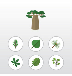 Flat icon natural set of baobab jungle alder and vector