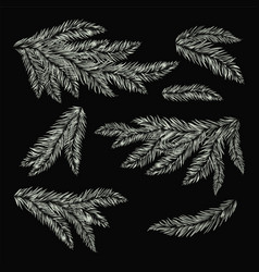 Frost pine tree branches vector