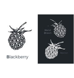 Hand drawn blackberry icons vector