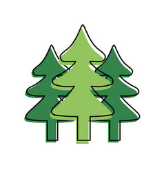 natural pine trees to ecology reserve vector image
