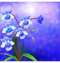 Bush Orchid violet on a luminous vector image vector image