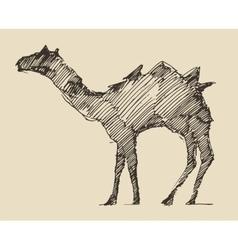 Camel engraved hand drawn sketch vector