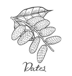 dates hand drawn vector image vector image