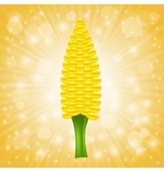Fresh Cob Corn vector