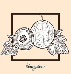 Hand drawn honeydew vector