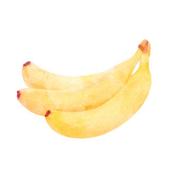 watercolor banana fruit on white vector image