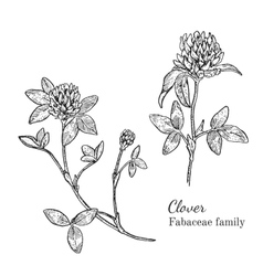 Ink clover hand drawn sketch vector image vector image
