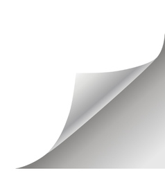 white paper background vector image