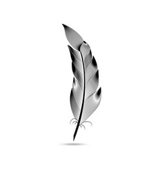 black and white large curved feather vector image