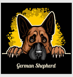 Color dog head german shepherd breed on black vector