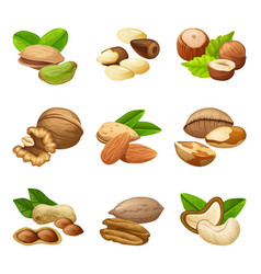 Colorful nuts collection vector