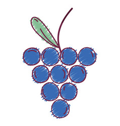 delicious fresh grape organic fruit vector image