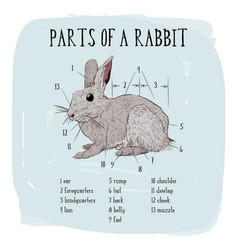 part of rabbit of engraving rabbit vector image