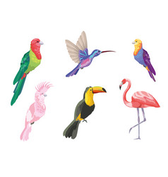 set tropical birds exotic nature vector image