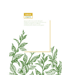 template nature organic branch sketch vector image
